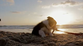 hanging out with my dog on the beach, it was great