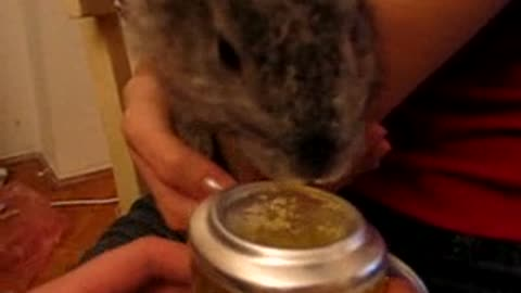 This bunny enjoys drinking beer ^^