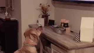 Playful dog barks at furry friends on TV