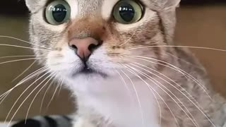 Funny Cat - When the cat watching horror movies - Video