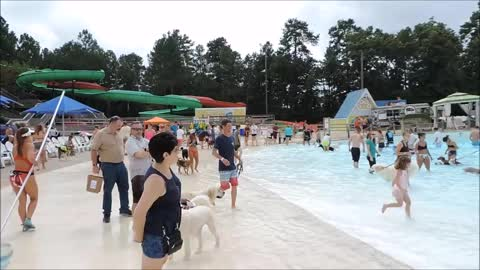 Over 500 Dogs Show Up To Va. Beach Water Park! WOW!