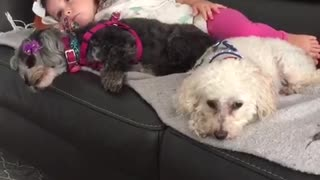 Trio of dogs snuggle with little girl on rainy day