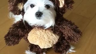 White dog in brown monkey costume