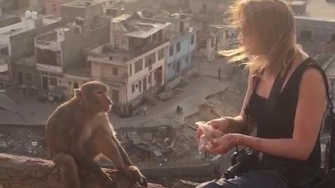If You Give a Monkey a Munchie