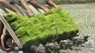 VST - Shakti Yanji Rice Transplanter  - Video