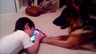 German Shepherd Puppy Dog learning how to play iPad