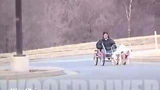 Sacco Dog Powered Go-Cart Perfect Rhythm - Video