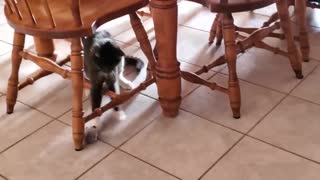 CAT VIDEOS TO MAKE YOUR THANKSGIVING WEEKEND! Funny Cats
