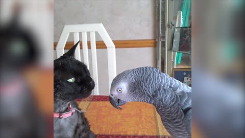 Parrot Scolds Feline For Unpleasant Cat-Attack