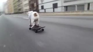 Adventurous English Bulldog Skillfully Skateboards Downhill - Video
