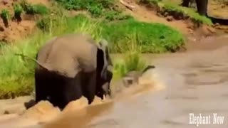 An Elephant Small pulls water And his Mother Rescues Him At The last Minute.