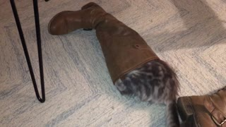 Case pretends he's Puss in Boots
