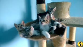 Synchronized kitten dancing is your ultimate mood-booster - Video