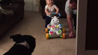 Baby walks for first time, finds it absolutely hysterical - Video