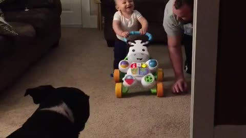 Baby walks for first time, finds it absolutely hysterical