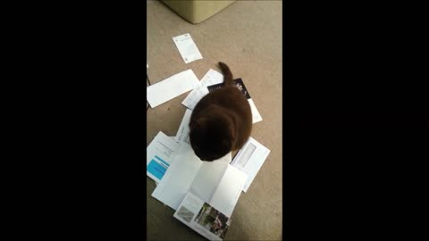 Strange cat likes mail dumped on her head