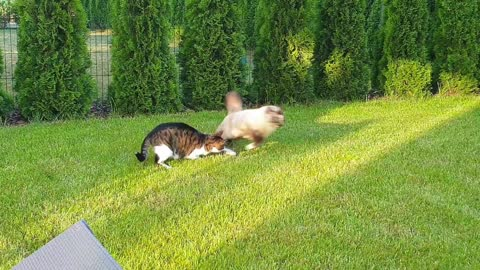 Pro stuntcats on green grass