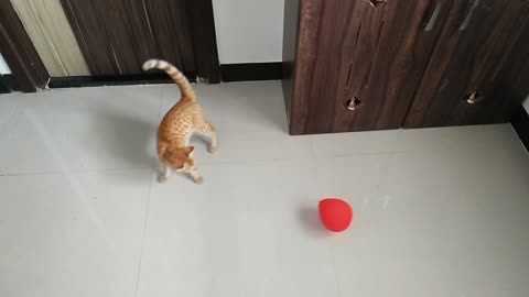 Adopted Street Cat First Time Seeing And Playing With Balloon