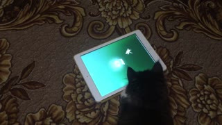 This Cat Loves Its Tablet - Video