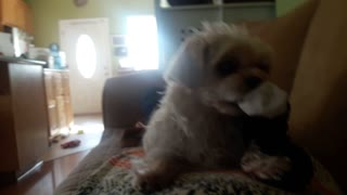 Funny Puppy Saying Do Not Touch My Toy!!  - Video