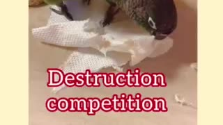 Parrot Destruction Competition