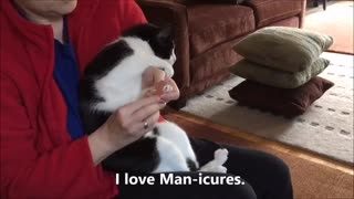 Weird Cat Gets MANicure  - Video