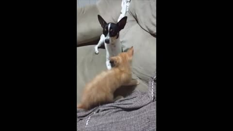Miellow Kitty - fighting