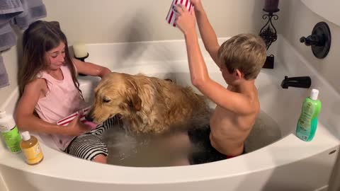 Children bathe their very dirty and patient golden retriever