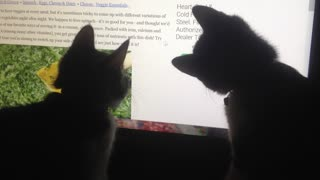 Two kittens look up their favorite recipe online - Video