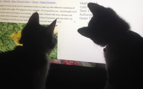 Two kittens look up their favorite recipe online