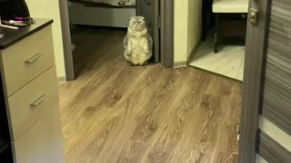 Kitty Gives Guests an Unusual Greeting