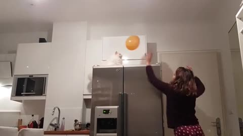 Cat plays balloon volleyball with her owner