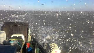 Seagulls Everywhere! - Video