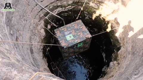 Drowning leopard pulled out from 45 feet deep well in incredible rescue