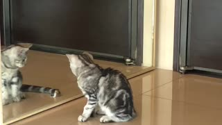 Silly Cat Plays with His Reflection