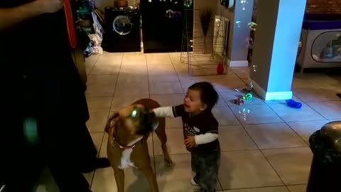 Boxer and baby play with bubble machine