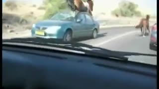 Horse Tramples Car - Video