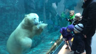 Swimming polar bear delights children in attendance - Video