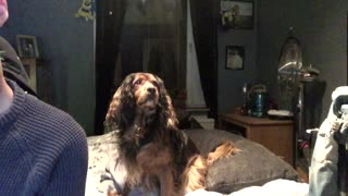 My Dog is chasing a Ghost? - Video