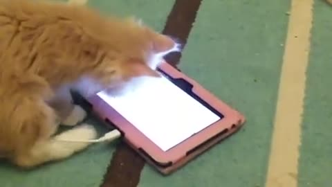Kitten discovers the joys of technology