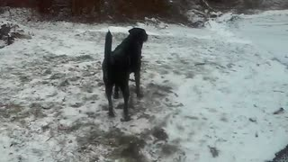Dog super excited about the snow - Video
