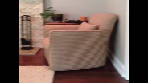 The Most Adorable Game Of Hide And Seek