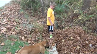 Dog Confused By Disappearing Boy - Video