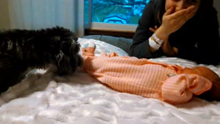 Puppy meets newborn baby for first time - Video