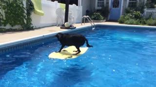Dog jumps onto surfboard in pool, rides it to fetch ball! - Video