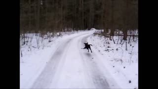 Puppy's winter fun and dangers  - Video