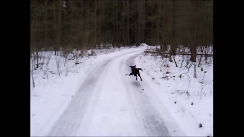 Puppy's winter fun and dangers