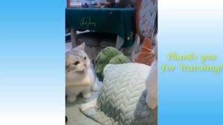 Cute Pets And Funny Animals Compilation 16 - Pets Garden