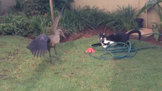 Epic backyard standoff between cat and bird