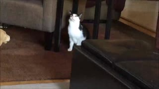 Cats Have Paper Competition - Video